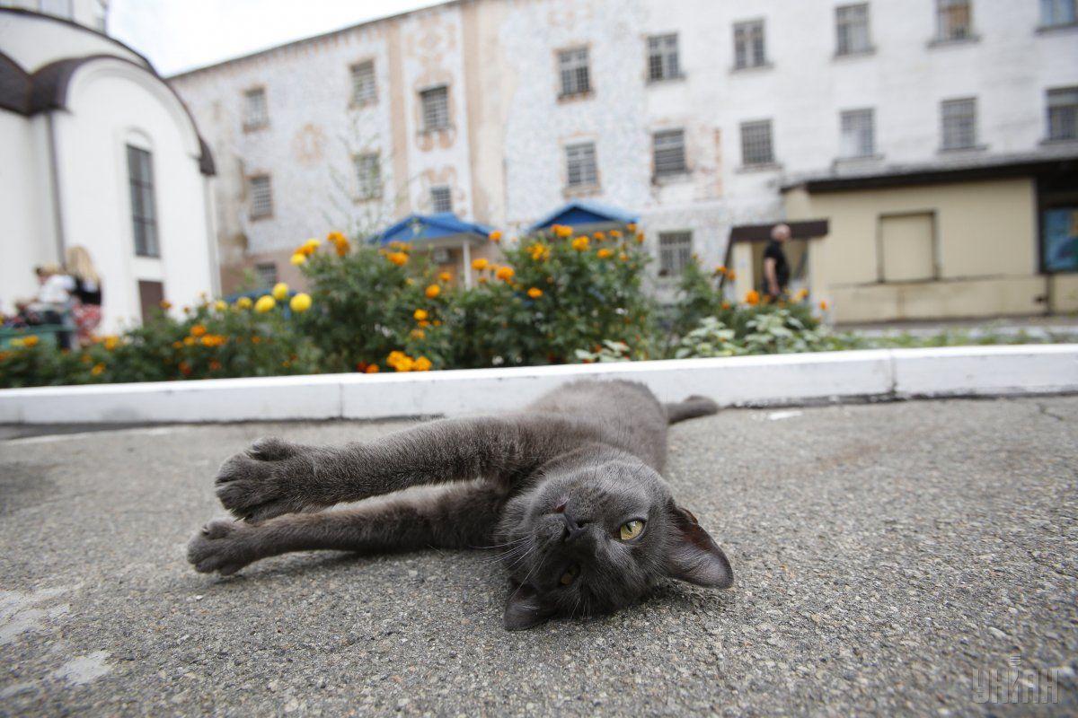 Одесский горсовет утвердил меры по защите котов от жестокого обращения / УНИАН