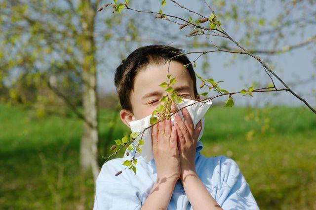 Пыльца амброзии попадает в нос, бронхи / aif.ru
