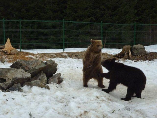 Жители реабилитационного центра бурого медведя
