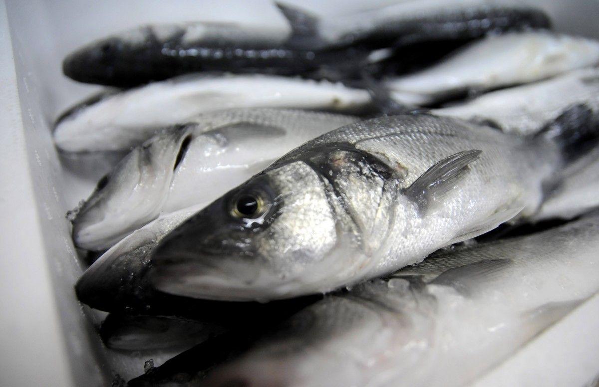 Одещина. Браконьєри наловили риби на 2 мільйона