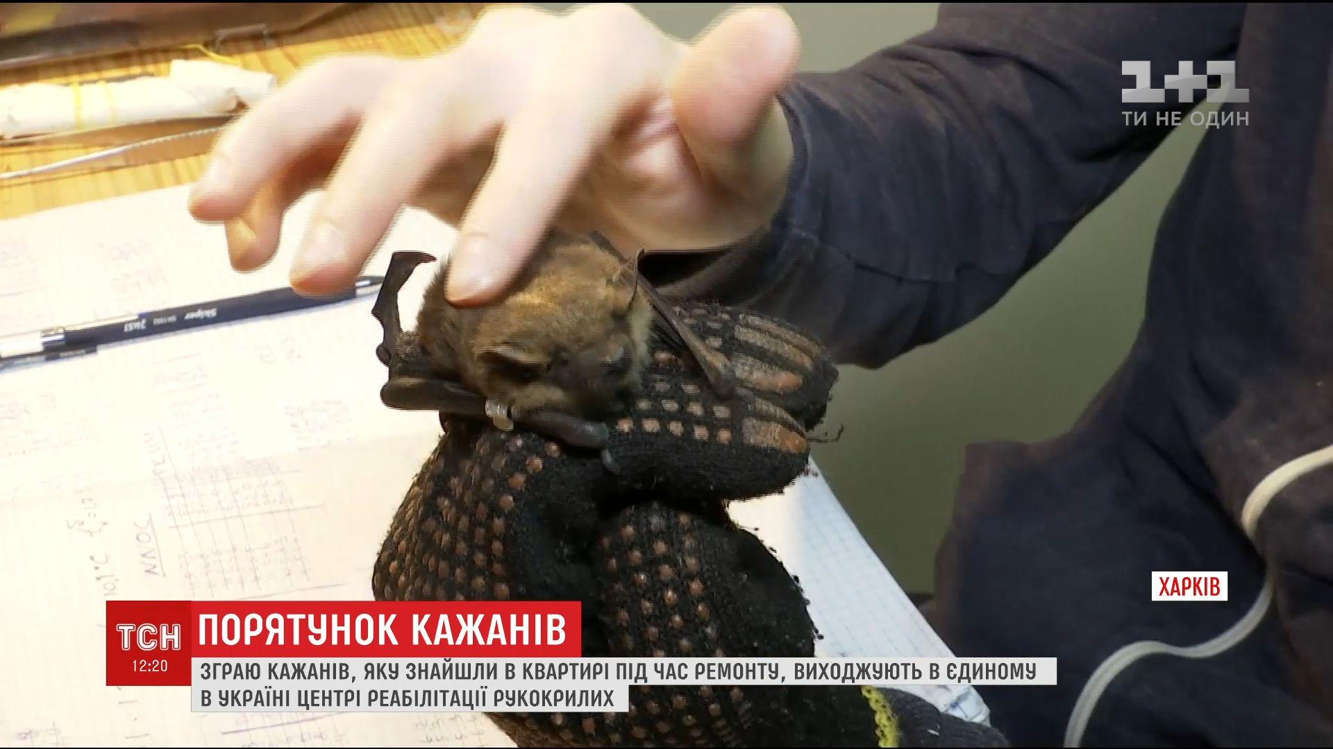 Специалисты считают чудом то, что летучие мыши выжили / скриншот