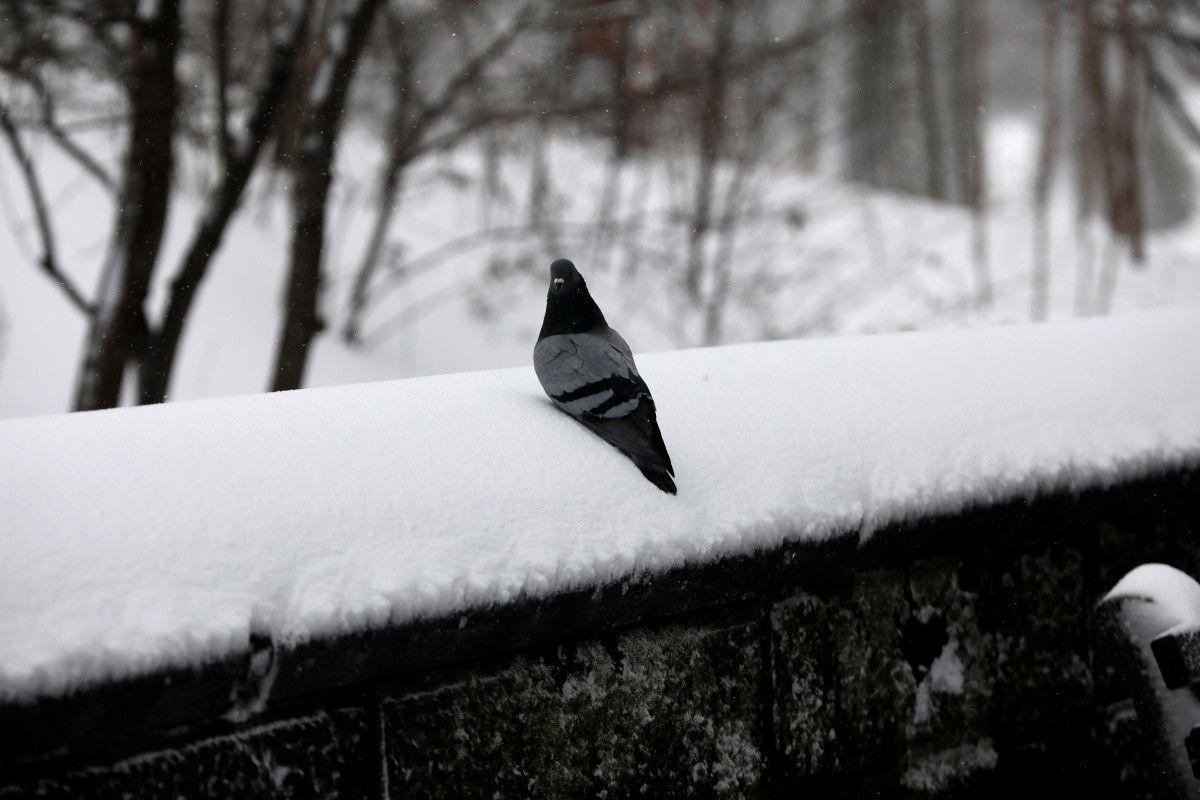 До деяких областей України серед квітня повернувся сніг / REUTERS