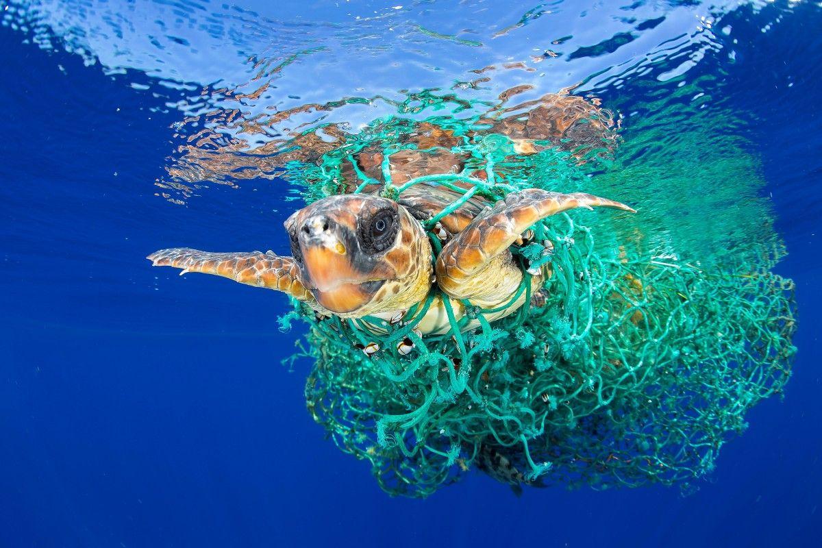 16 июня - Международный день морской черепахи / фото REUTERS