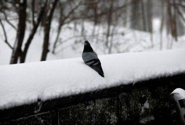 Синоптики дали детальний прогноз на зиму в Україні