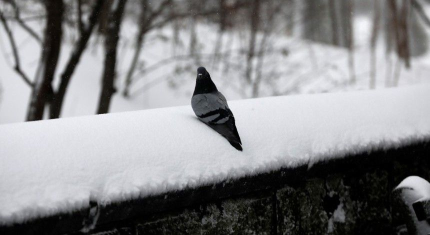 Синоптики дали подробный прогноз на зиму в Украине
