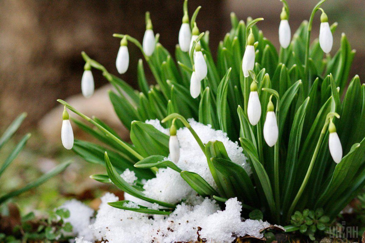До України прийшла весняна погода / фото УНІАН