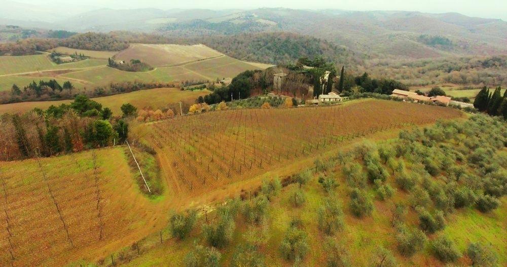 Vineyard in Italy / FBK
