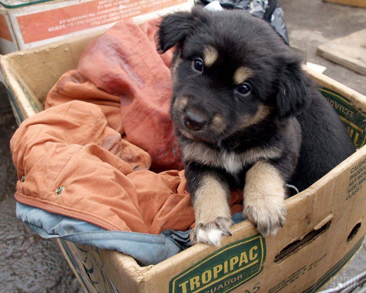 На 200 щенков из Чернобыля уже прислали более 300 запросов \ Фото УНИАН