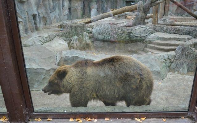 В столичном зоопарке умерла медведица / vz.ua