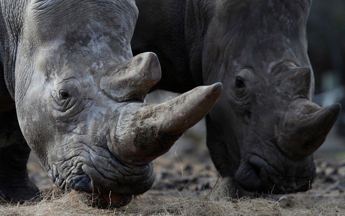 Носорог / REUTERS