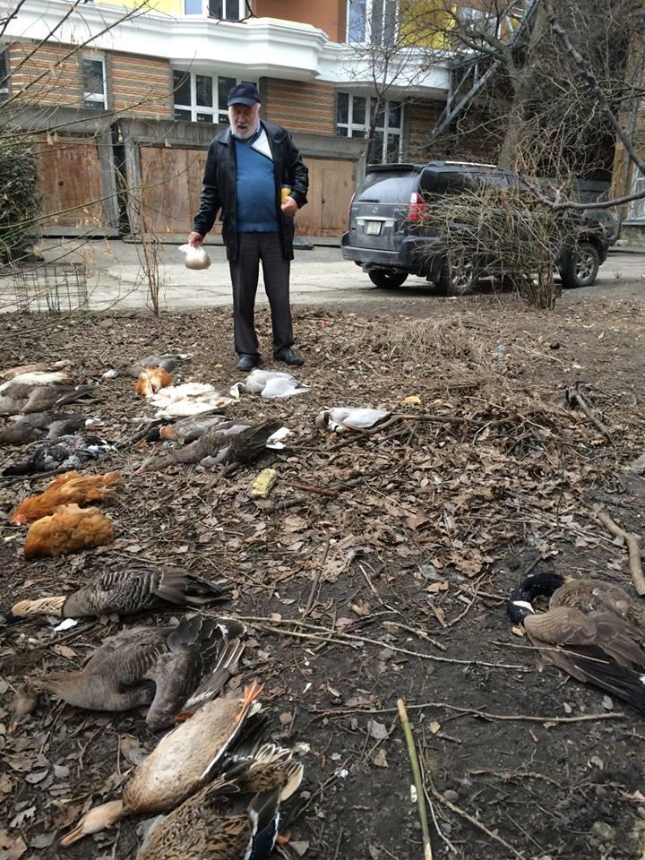 В Киеве отравили птиц / facebook.com/pygyda