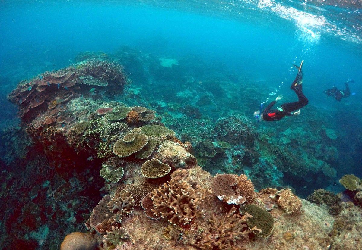 Большой Барьерный риф / REUTERS