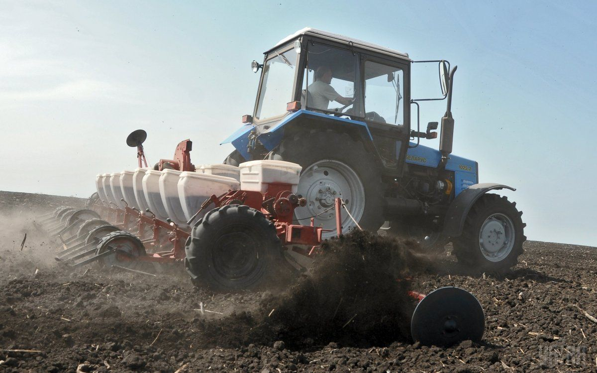 Аграрии начали посев озимого рапса / фото УНИАН