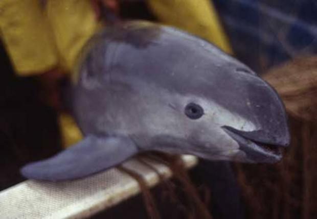 Новорожденное животное с пуповиной нашли на берегу / ianimal.ru