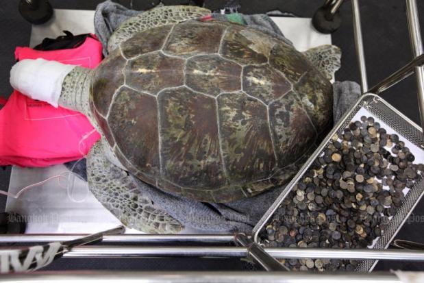 Черепаха отримала кличку Скарбничка / bangkokpost.com