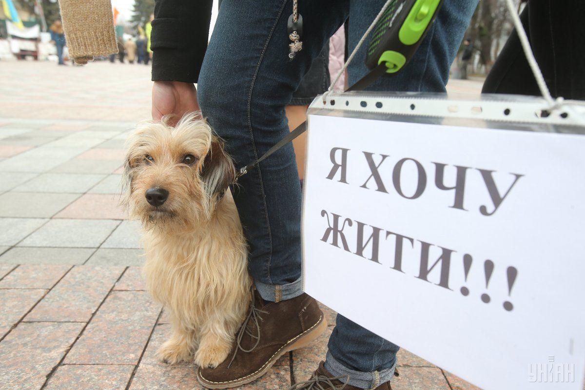 В Одесі направлено до суду справу щодо підозрюваного у жорстокому поводженні з тваринами / фото УНІАН