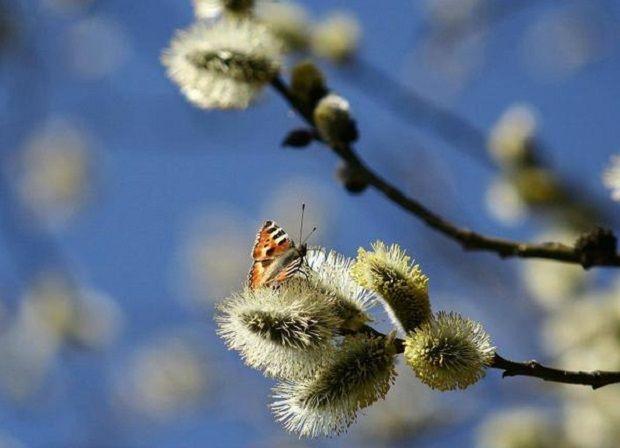 Погода в Україні на 1 квітня, Вербну неділю, буде теплою / фото cards.i.ua