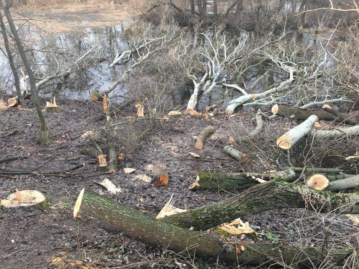 У Дніпрі вирубують дерева, які зміцнюють дамбу