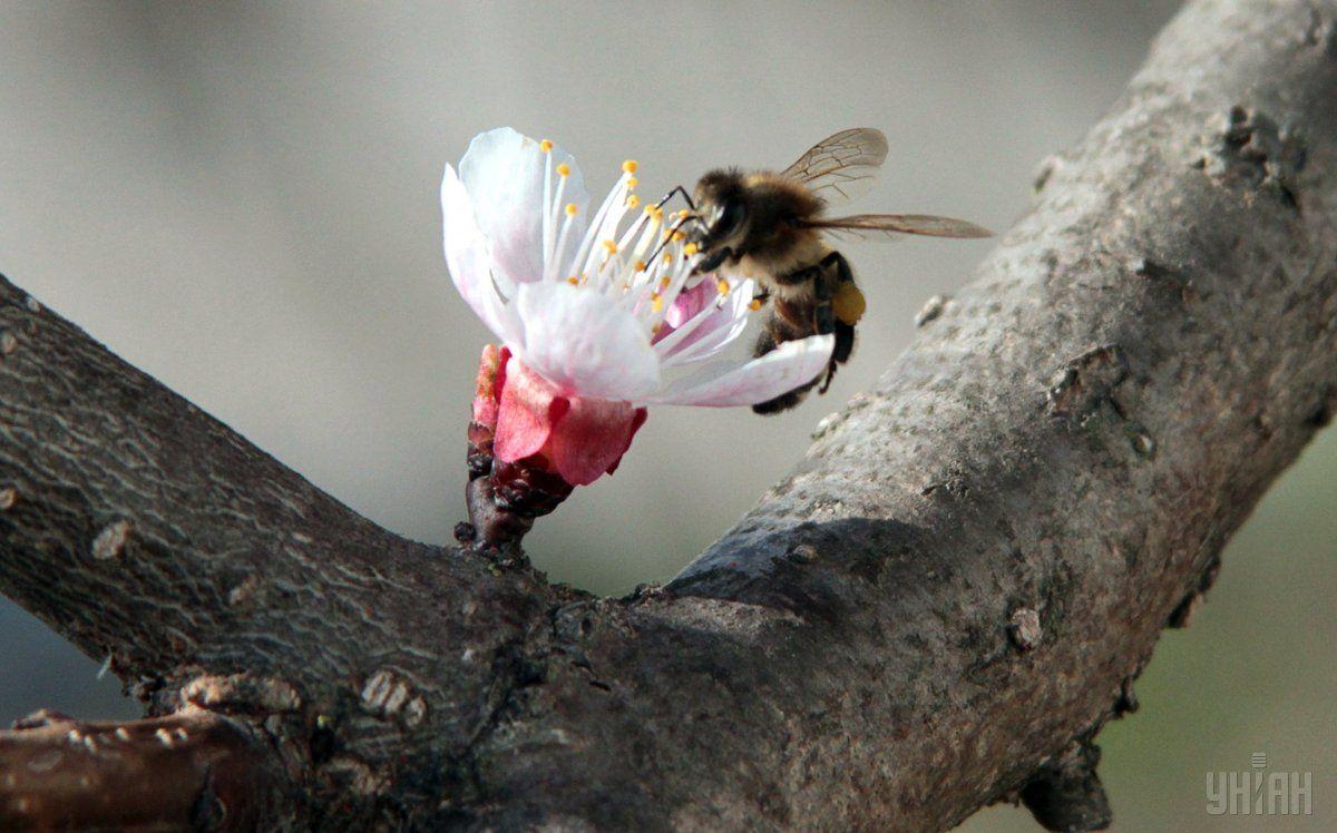 Уменьшение количества насекомых может повлечь за собой непоправимые последствия для целых экосистем / фото УНИАН