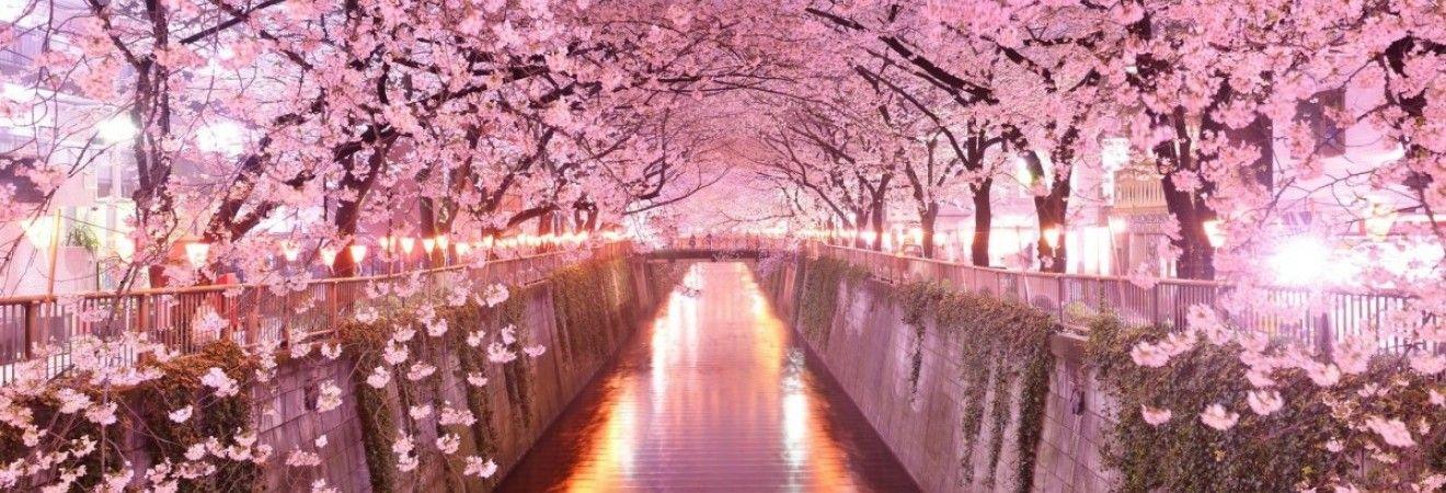 У Токіо на п'ять днів раніше звичайного зацвіла сакура