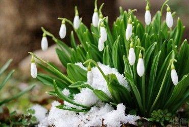 Весна пришла: сегодня в Украине солнечная погода, температура до +5°