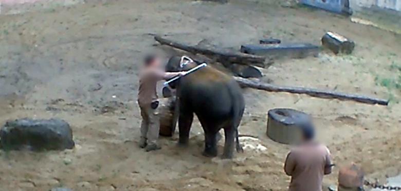 Слон з доглядачами в зоопарку Ганновера / Фото PETA