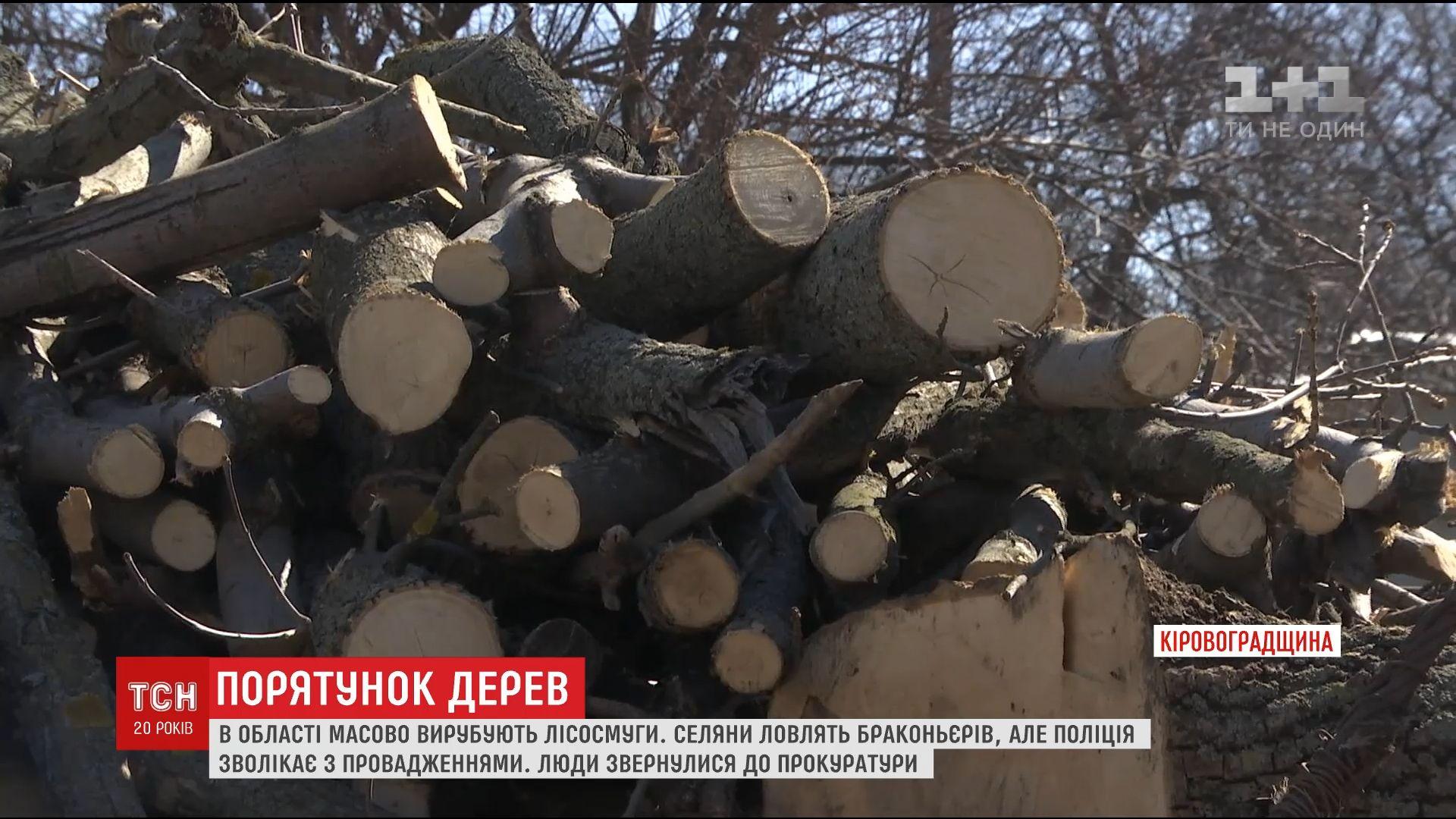 На Кировоградщине массово вырубают деревья, которые специально высаживали селяне /