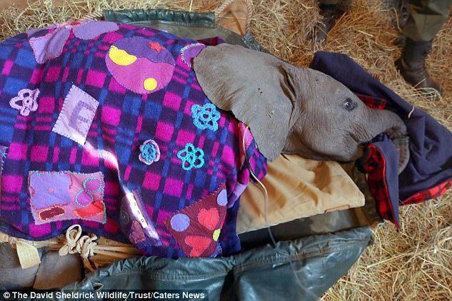 Врачи три часа проводили операцию, чтобы спасти животное / MailOnline