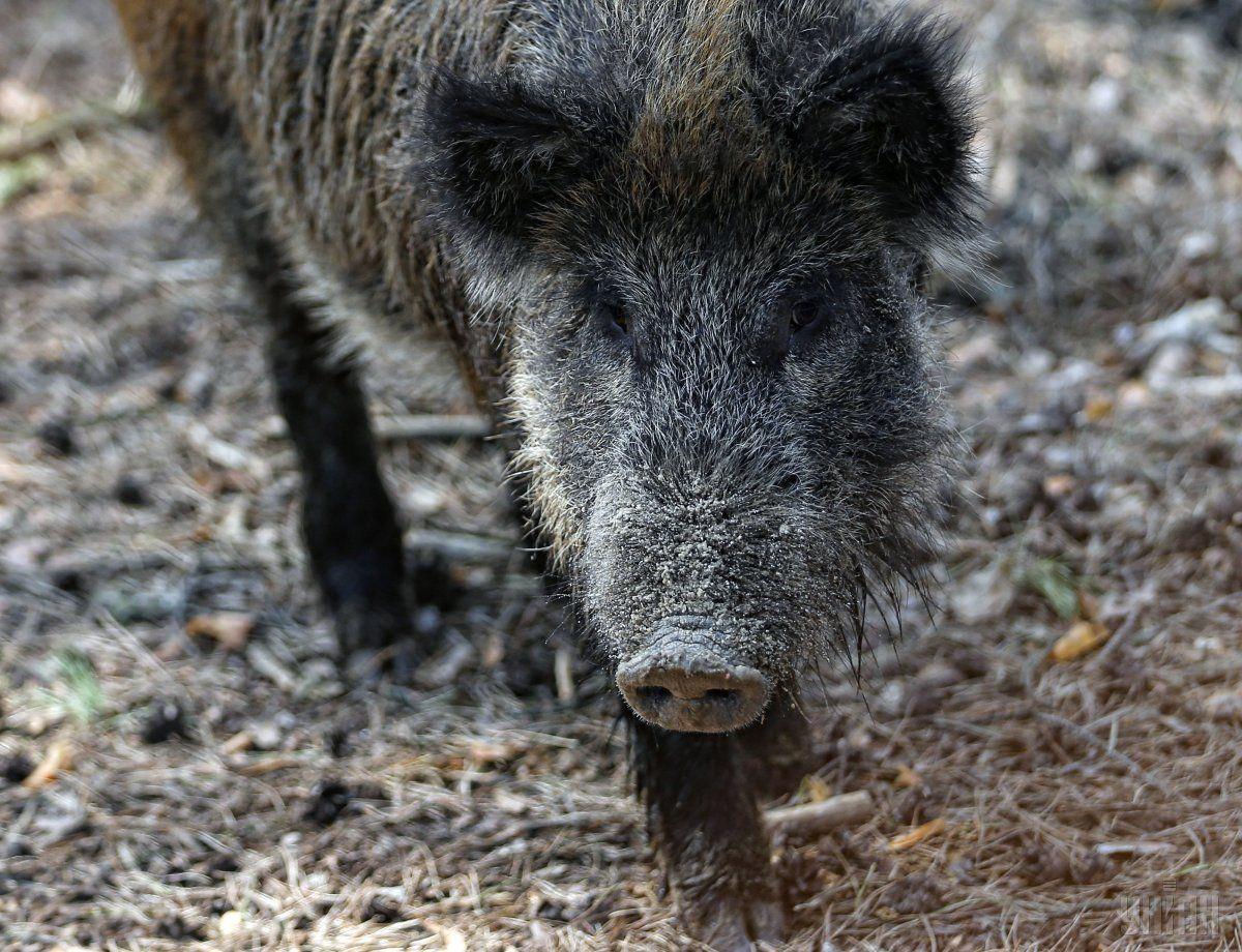 Туши трех погибших животных нашел охотник / фото УНИАН
