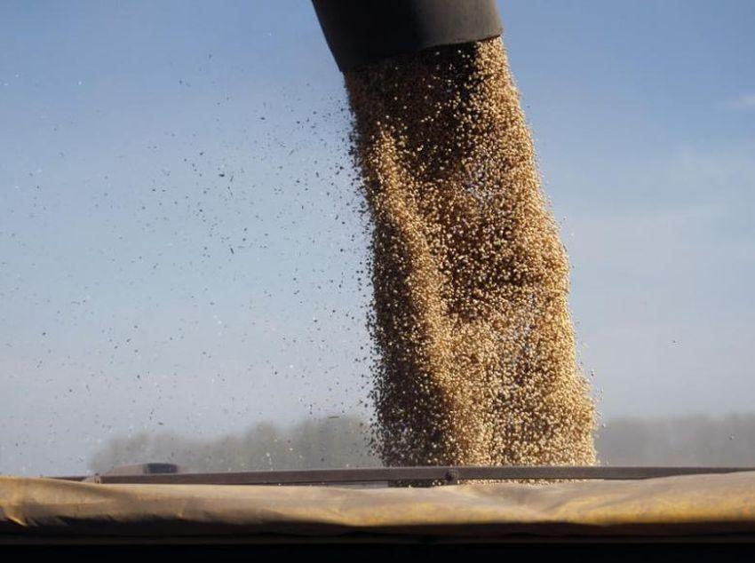 Украина собрала2,3 миллиона тоннсоевых бобов / REUTERS