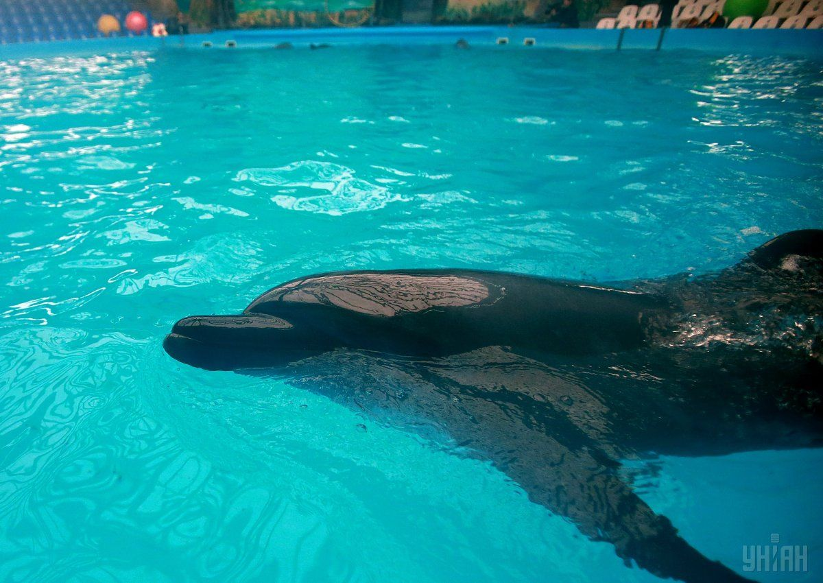 Дельфинарий на Ланжероне открылся в 2005 году / Фото УНИАН