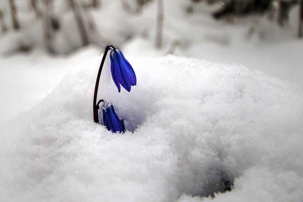 У Білорусі випав весняний сніг / Альфред Микус via vk.com