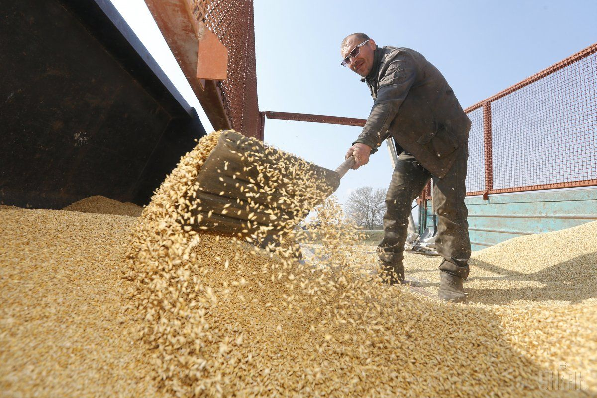 Середня врожайність зернових становила 47,2 ц/га / фото УНІАН