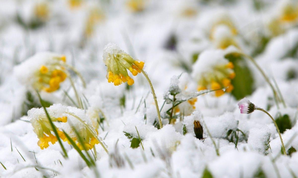 У Німеччині випав сніг / Reuters