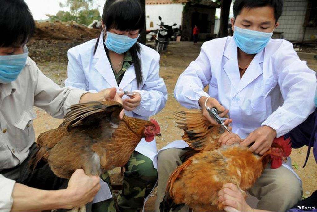 В Японии обнаружили вспышку птичьего гриппа / фото REUTERS
