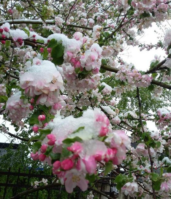 Симферополь засыпало снегом среди весны / @MRNChg