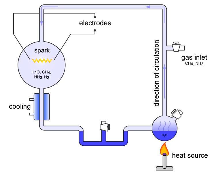 РНК — довгі молекули, які, як і ДНК, що складаються з чотирьох нуклеотидів / phys.org
