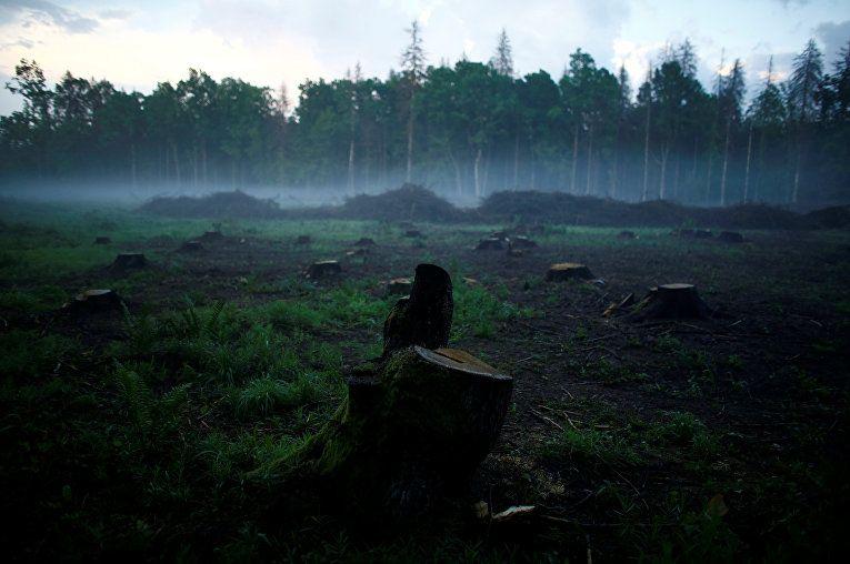 Суд ЄС визнав незаконною вирубку дерев у Біловезькій пущі