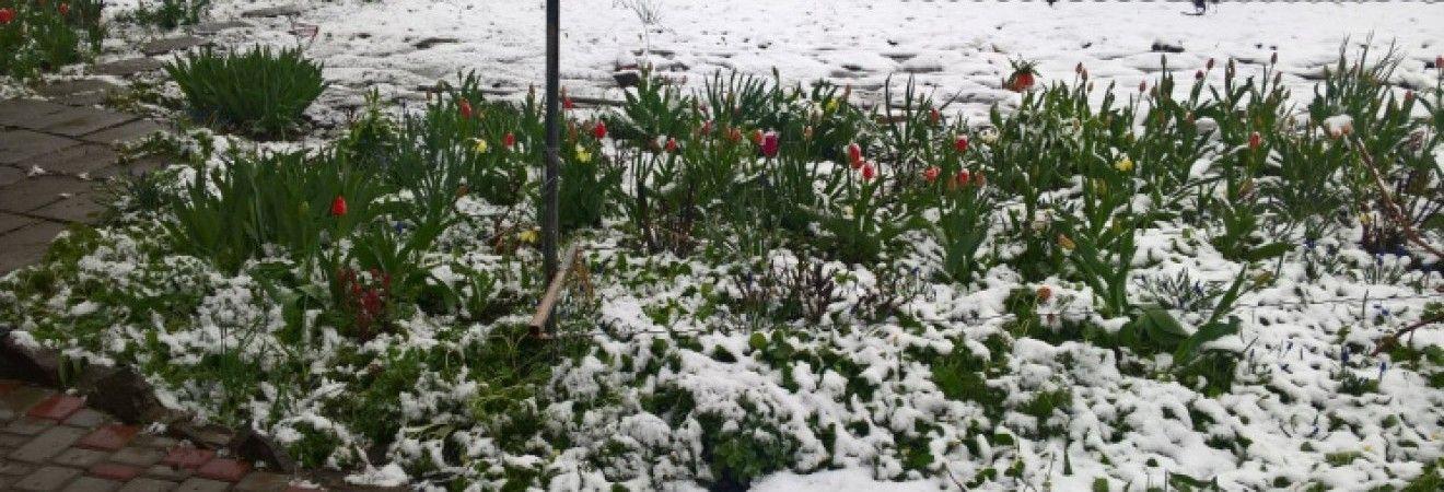 Лозовую на Харьковщине накрыло снегопадом: школьникам устроили внеочередные каникулы (фото, видео)