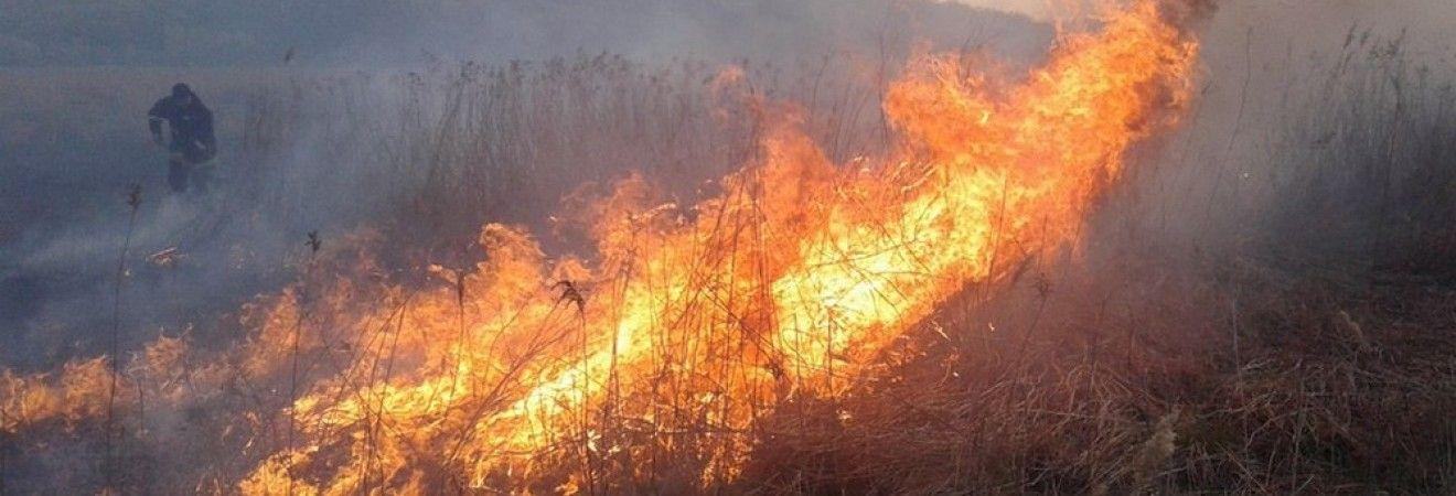 В 11 областях Украины объявили наивысший уровень пожарной опасности