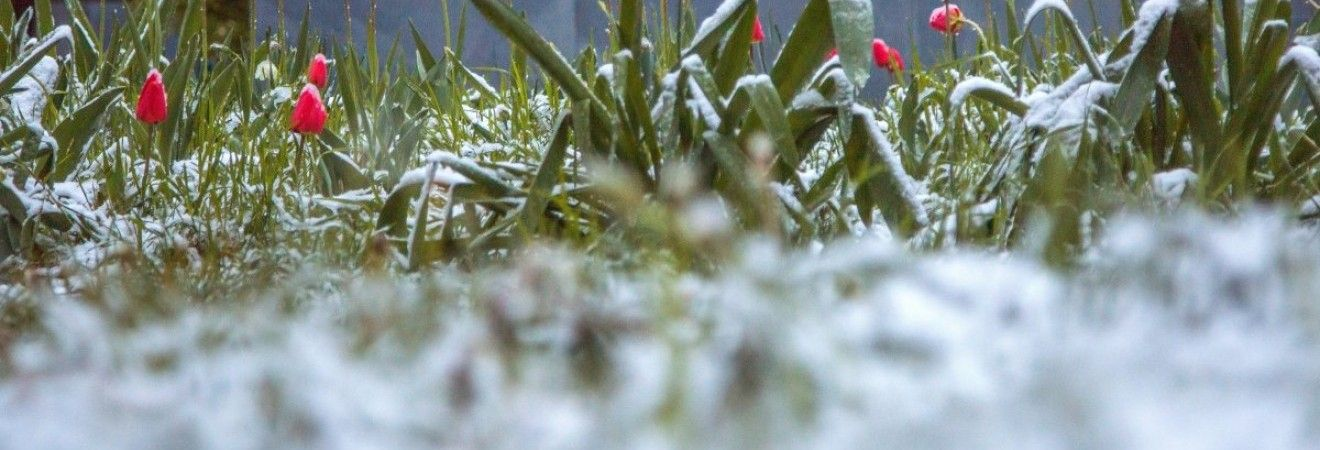 У Гідрометцентрі пояснили причину травневого снігопаду в Україні