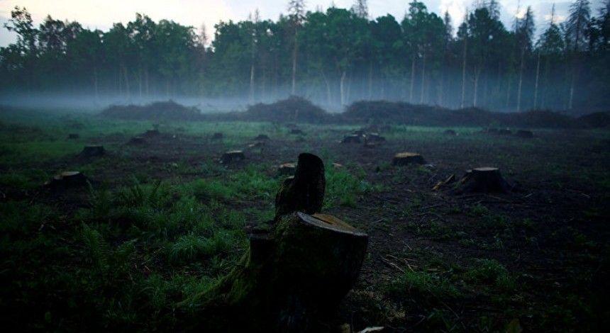 Суд ЄС визнав незаконною вирубку Польщею дерев у Біловезькій пущі
