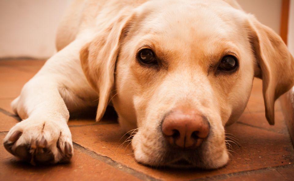 Для спасения бездомных животных предлагается создать соответствующие пункты / фото: via BartvanRijn flickr.com