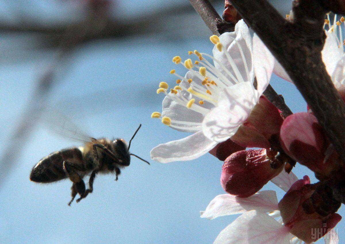 Пчелы, муравьи и жуки вымирают в восемь раз быстрее, чем млекопитающие \ фото: УНИАН