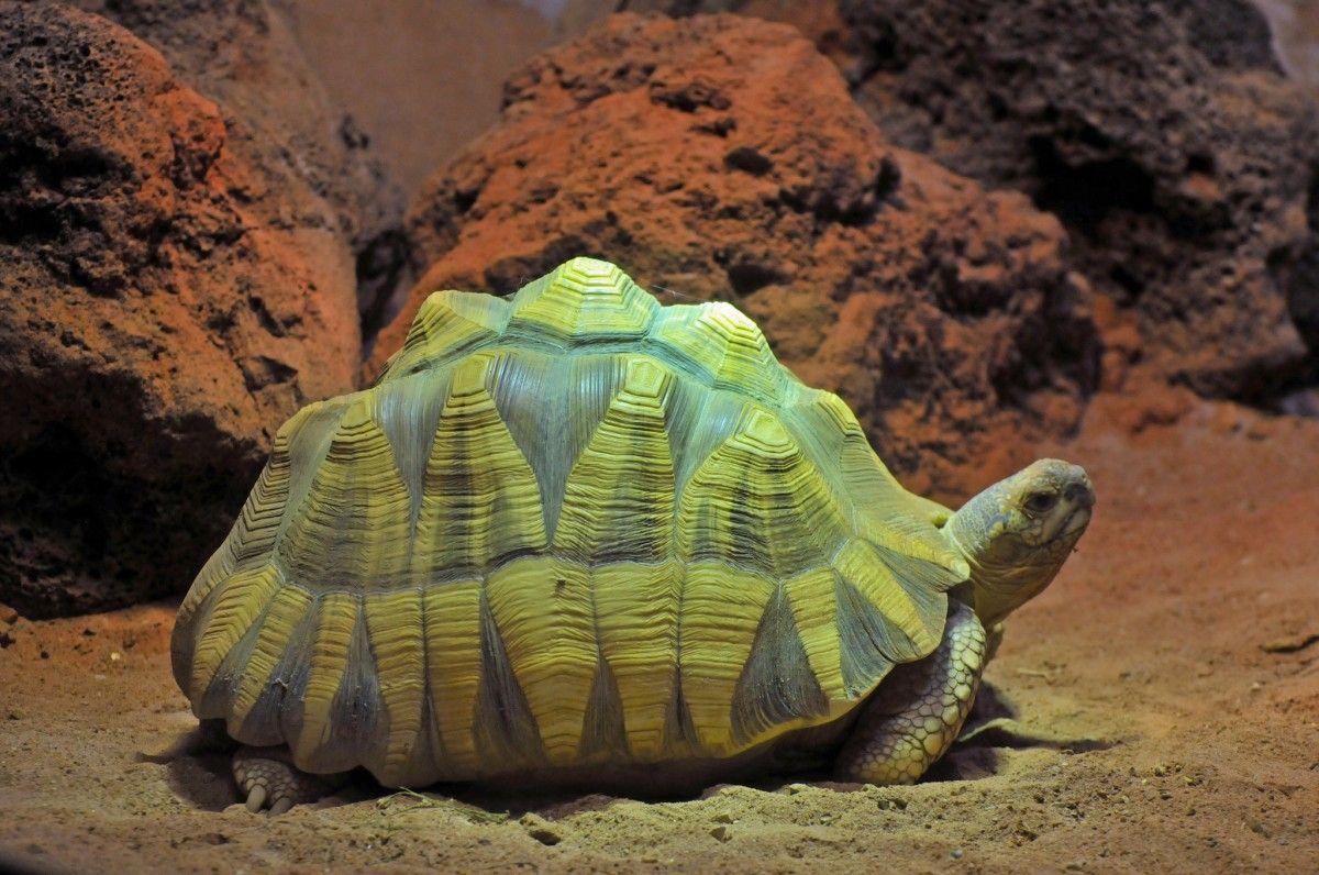 """Ангонока признана одним из самых """"уязвимых"""" видов в мире / Фото Ulli J. via flickr.com"""