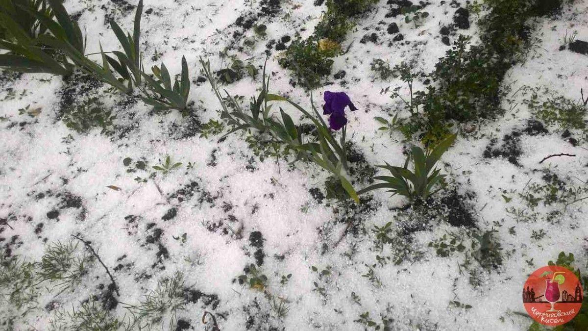 На Чернігівщині випав сніг / vk.com/chernihiv_kisel