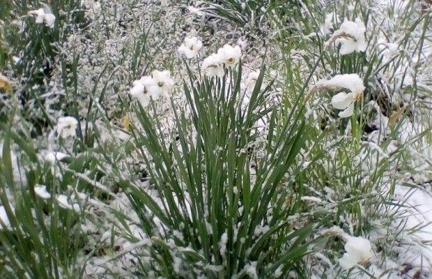 В Україну за звичкою знову повернулася зима / Фото з соцмереж