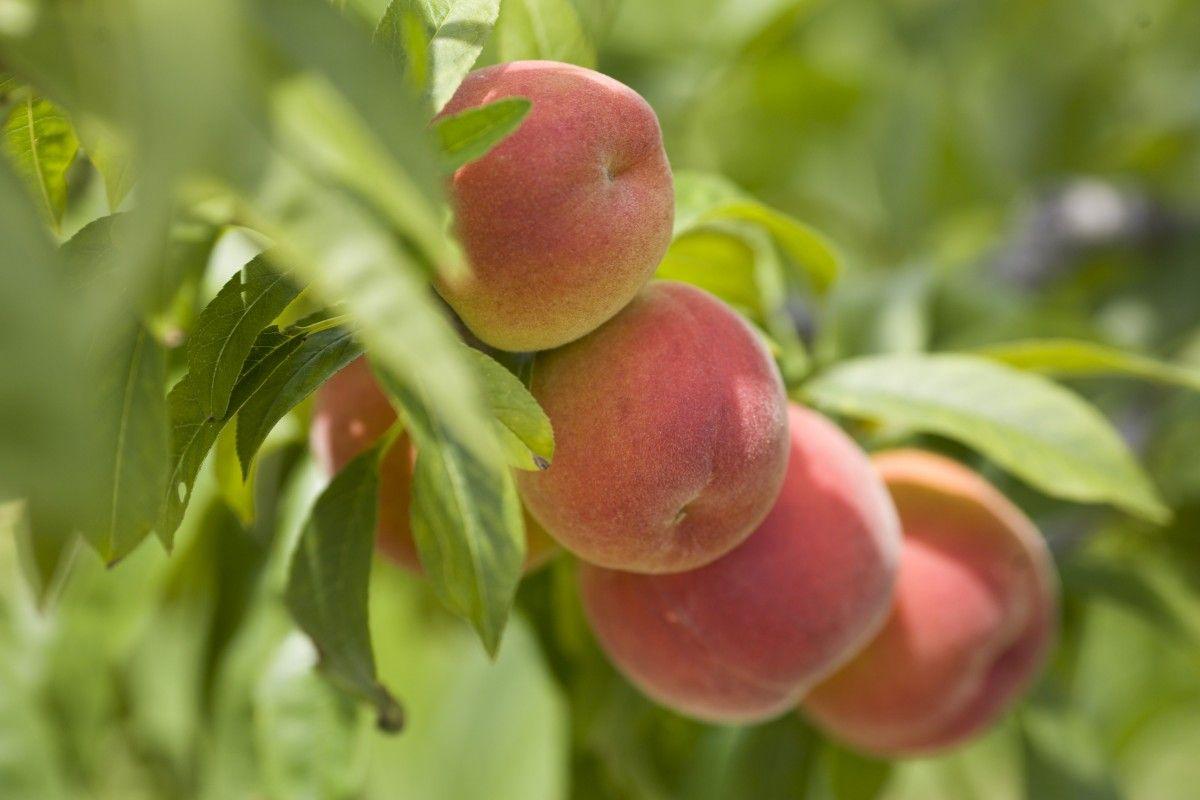 Февральские морозы не пощадилиплодовые деревья / REUTERS