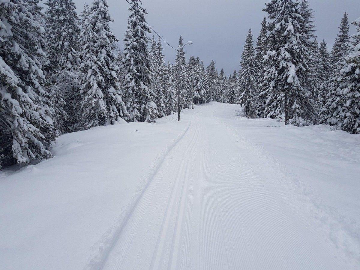 В Алясці зійшла лавина / twitter.com/Meteorologene
