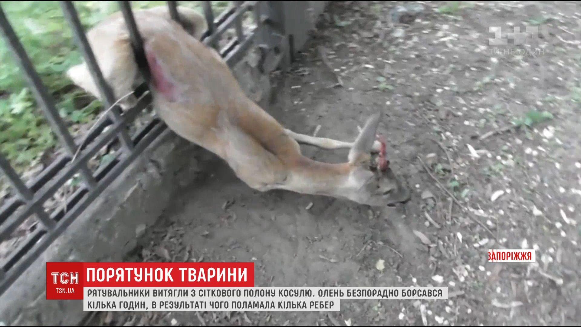 13_kosylya.mp4 / скріншот відео
